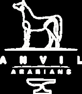 anvil arabians
